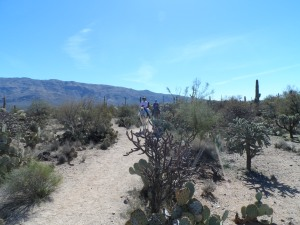 Cactus Forest Trail